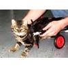 Инвалидная коляска для животных