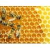 Продаем башкирский мед с собственной пасеки